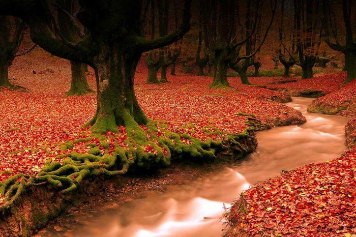تورهای طبیعت گردی