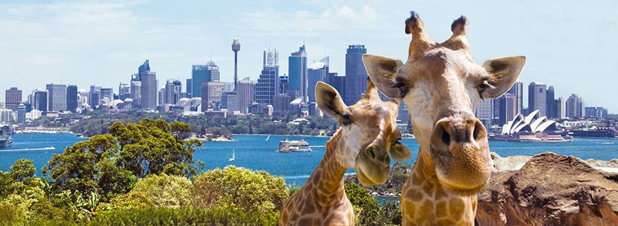 اطلاعات تکمیلی ویزای استرالیا